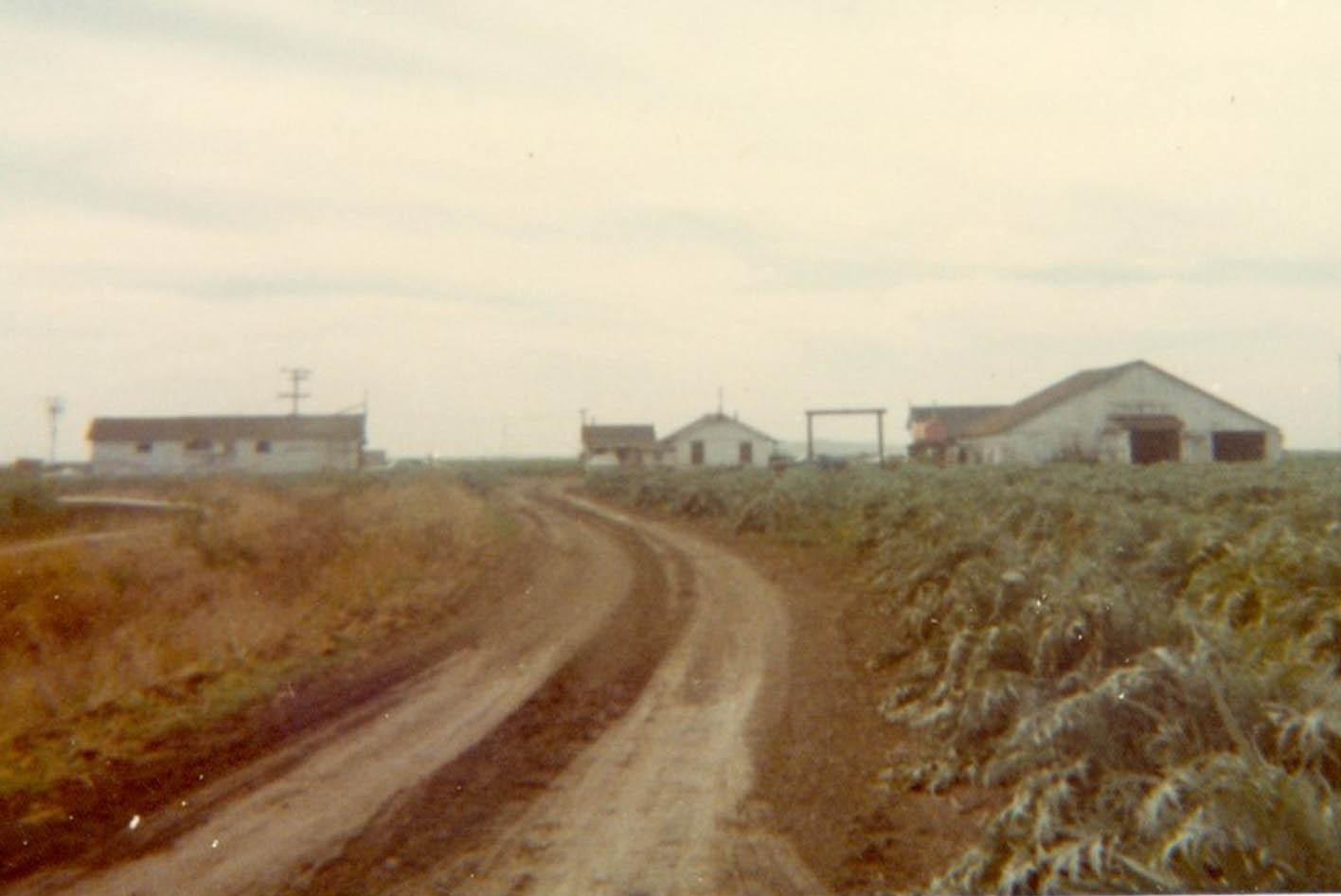 Artichoke festival artichoke fields history
